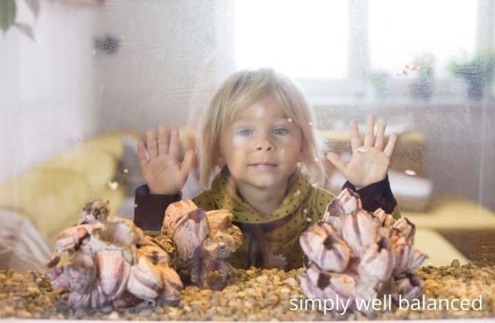 Indoor calming activities for kids: fish tank